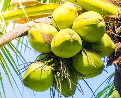 benefits coconut oil